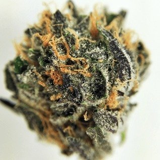 Buy Godfather OG weed