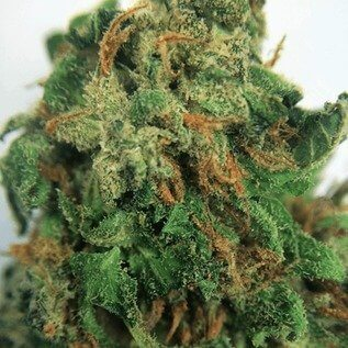 Buy Blue Dragon Weed - Buy Blue Dragon Marijuana | Buy Weed Online