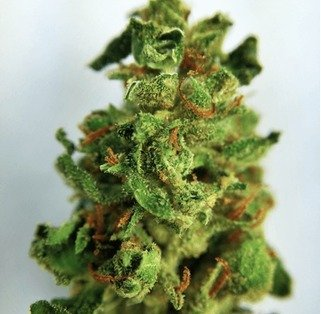 Buy Diamond Valley Kush weed