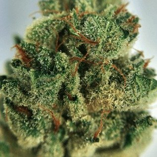 Buy Gorilla Glue #4 Weed