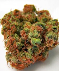 Buy Panama Red Marijuana