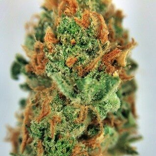 Buy strawberry diesel weed online