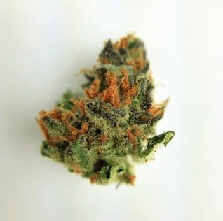 Buy Black Widow Marijuana Online - Buy Cannabis Online | Buds2go