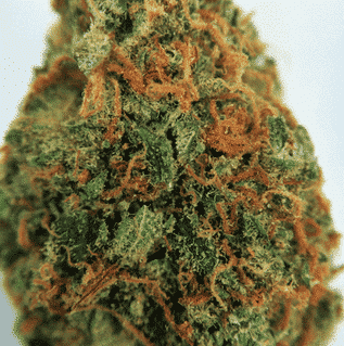 Buy Jack The Ripper weed online